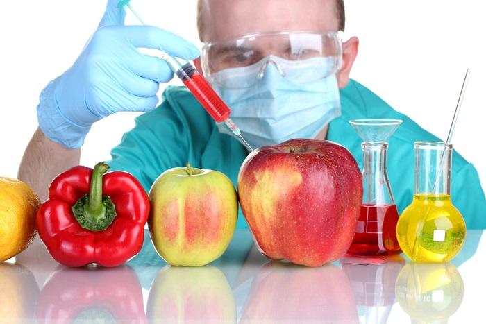 تراریخته - دستکاری ژنتیکی محصولات کشاورزی - زمان برداشت محصول