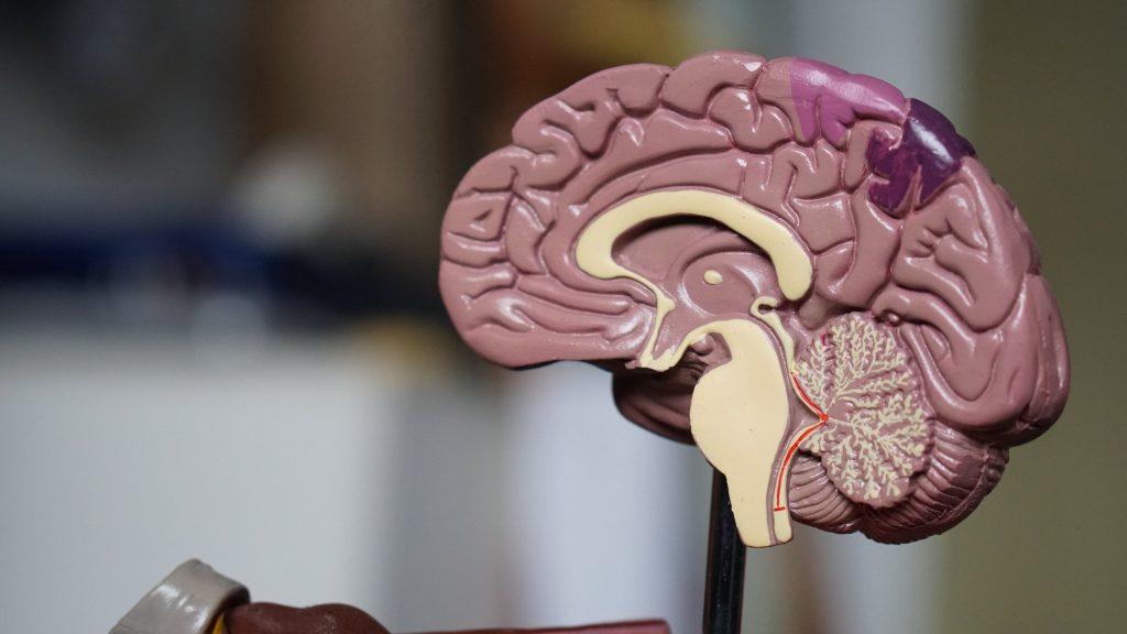 سرطان مغز چیست و از علائم و روش های درمانی آنچه می دانید؟